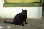 ph_cat_02